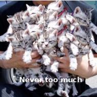 98722d1343011037-how-many-animals-too-many-t1um6nxjtqxxxxxxxx_-72359069-0-pix